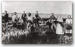 На жатве. Ряжский уезд. 1913 год